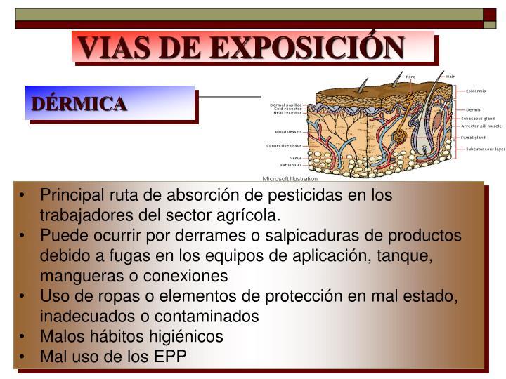 VIAS DE EXPOSICIÓN