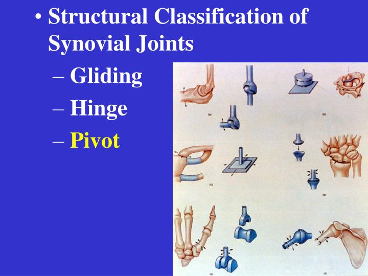 Structural Classification of Synovial Joints