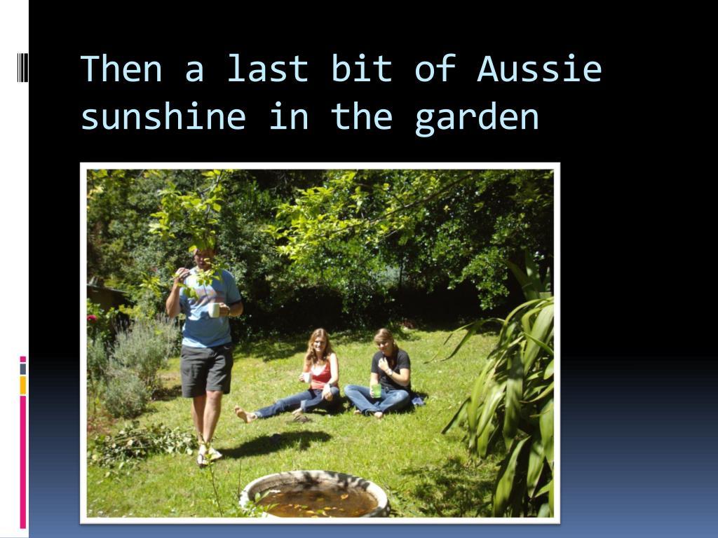 Then a last bit of Aussie sunshine in the garden