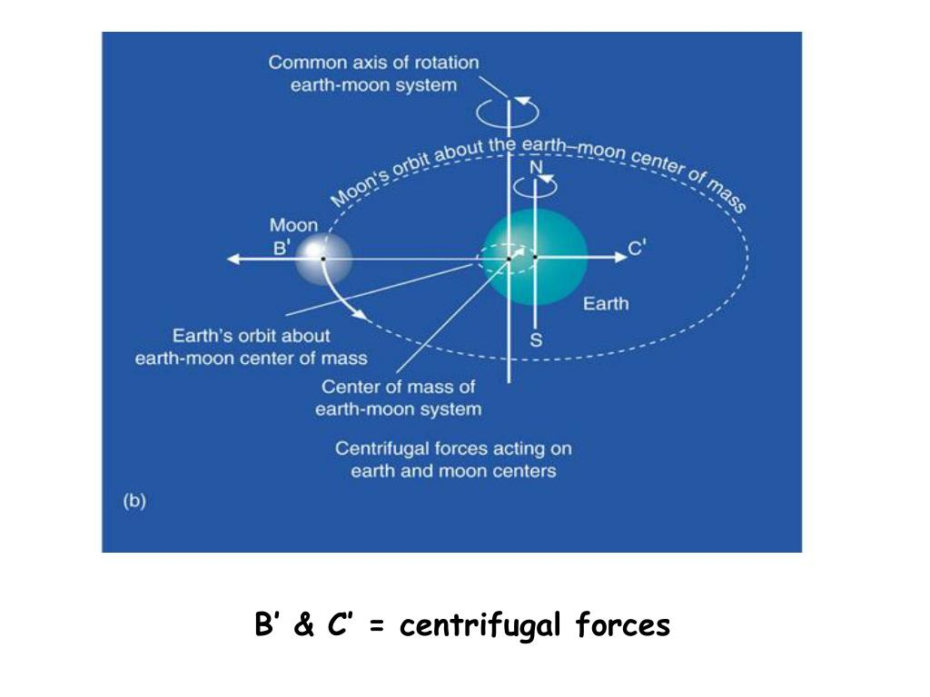 B' & C' = centrifugal forces