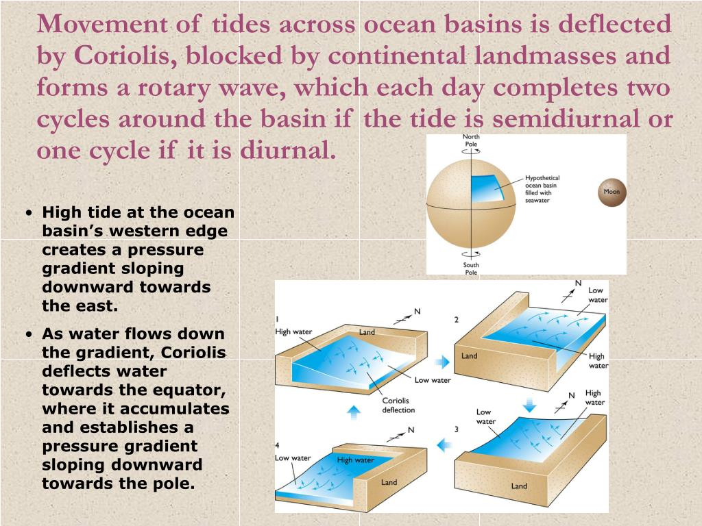Movement of tides across ocean basins is deflected by Coriolis, blocked by continental landmasses and forms a rotary wave, which each day completes two cycles around the basin if the tide is semidiurnal or one cycle if it is diurnal.
