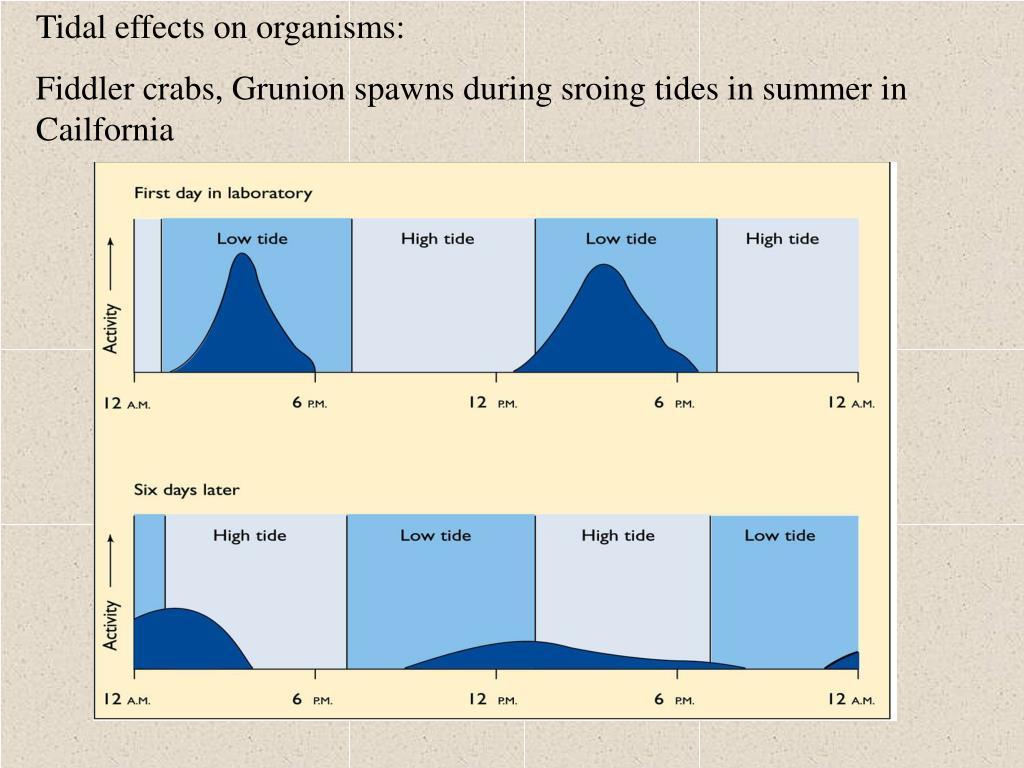 Tidal effects on organisms: