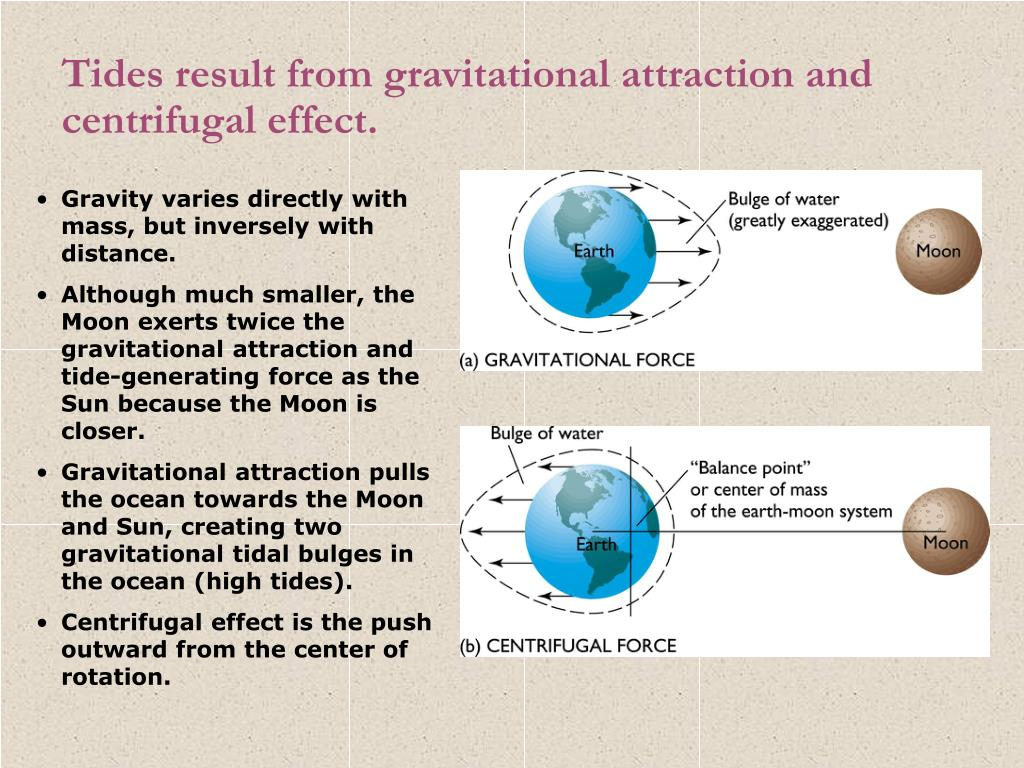 Tides result from gravitational attraction and centrifugal effect.
