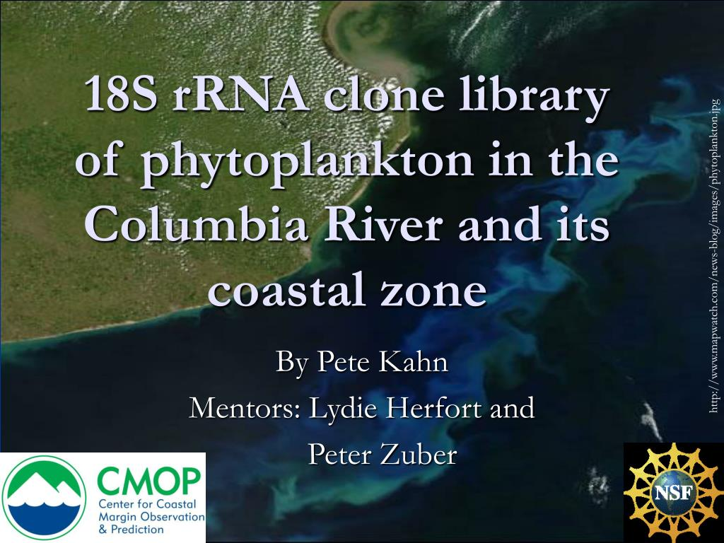 18S rRNA clone library of phytoplankton in the Columbia River and its coastal zone