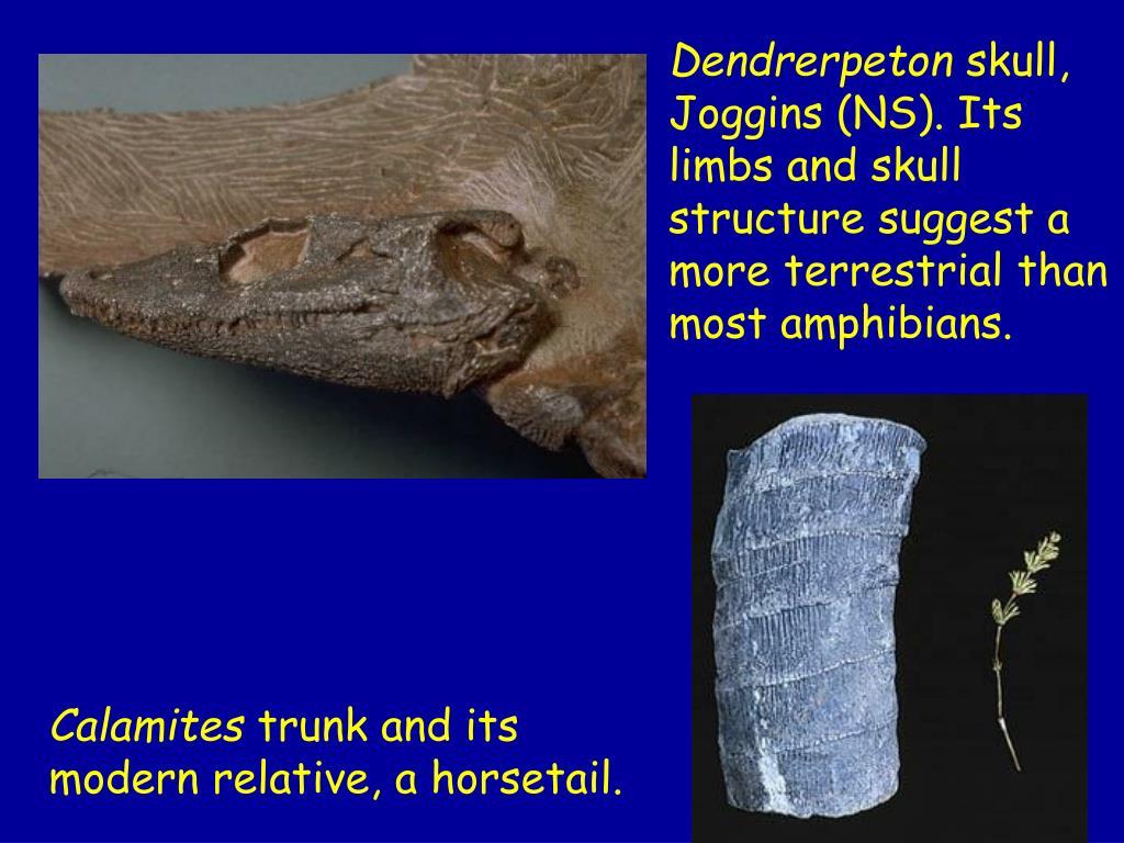 Dendrerpeton
