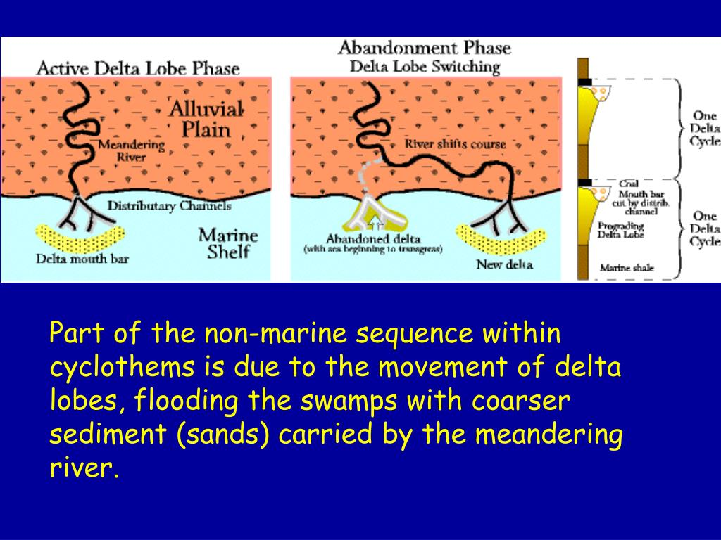 Part of the non-marine sequence within cyclothems is due to the movement of delta lobes, flooding the swamps with coarser sediment (sands) carried by the meandering river.