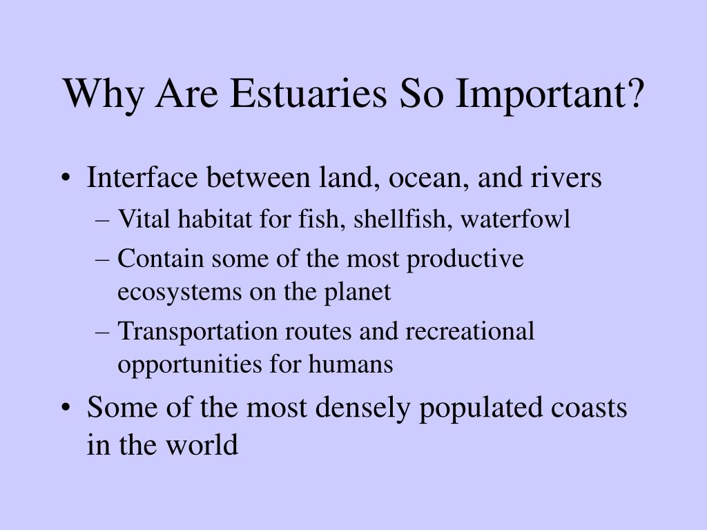 Why Are Estuaries So Important?