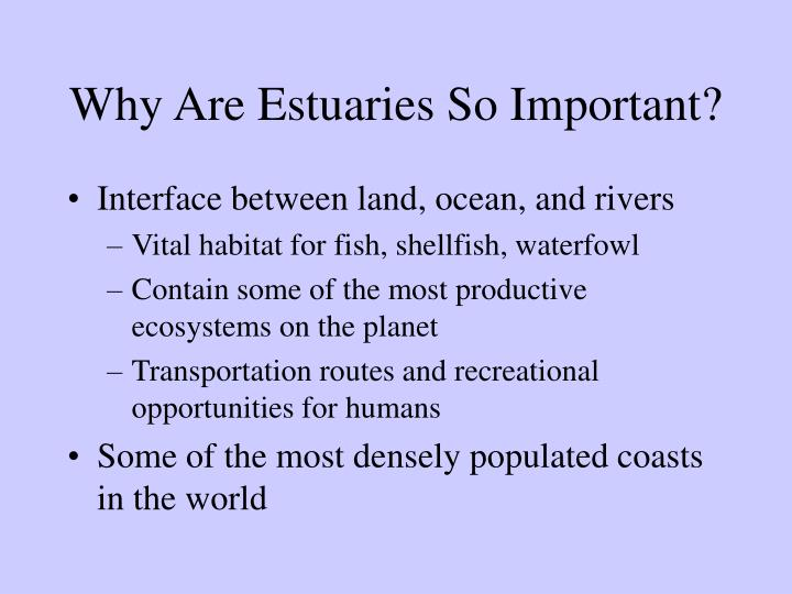 Why are estuaries so important