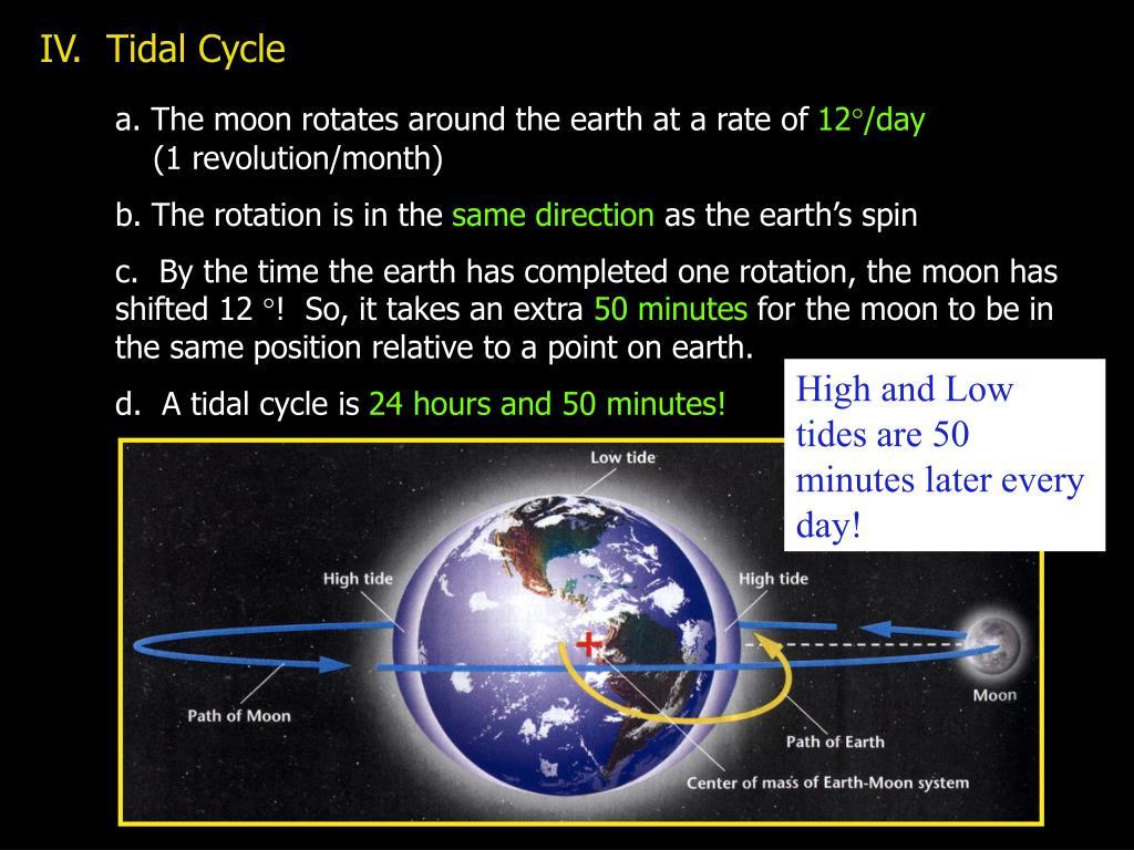 IV.  Tidal Cycle