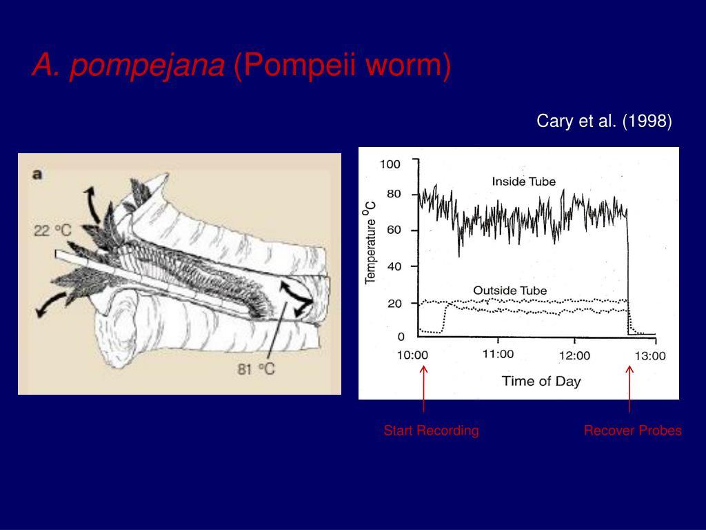 A. pompejana