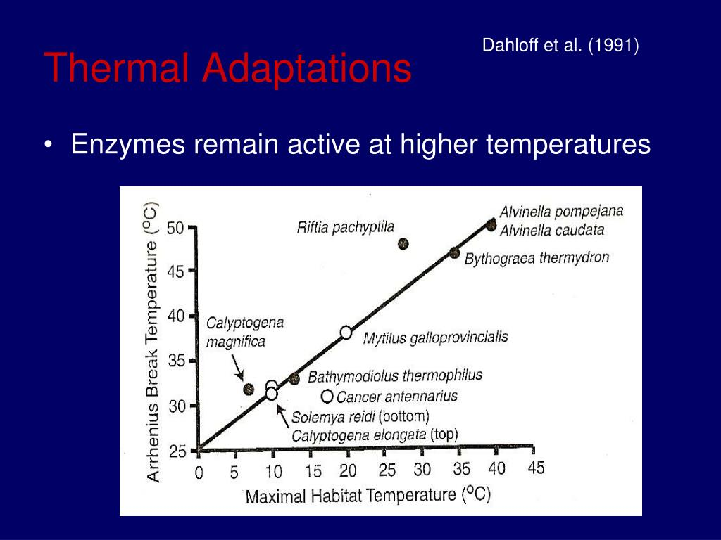 Thermal Adaptations