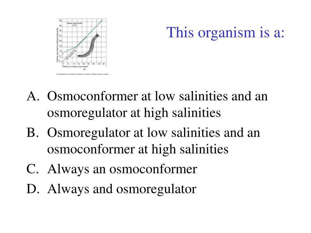 This organism is a: