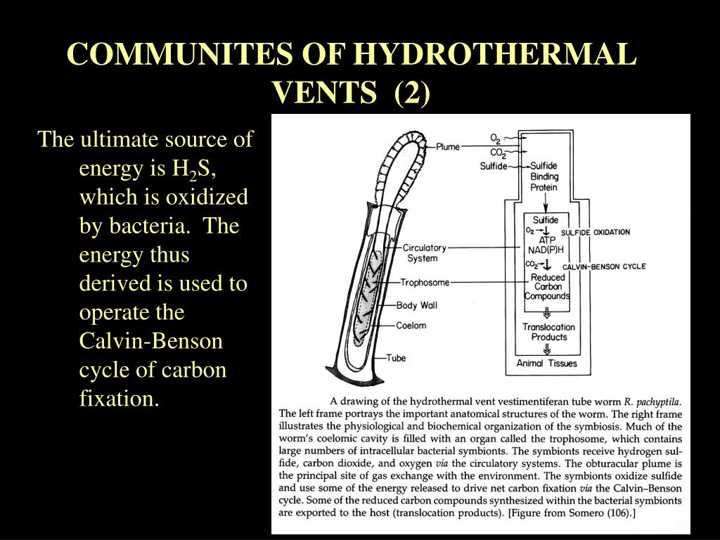 COMMUNITES OF HYDROTHERMAL VENTS  (2)