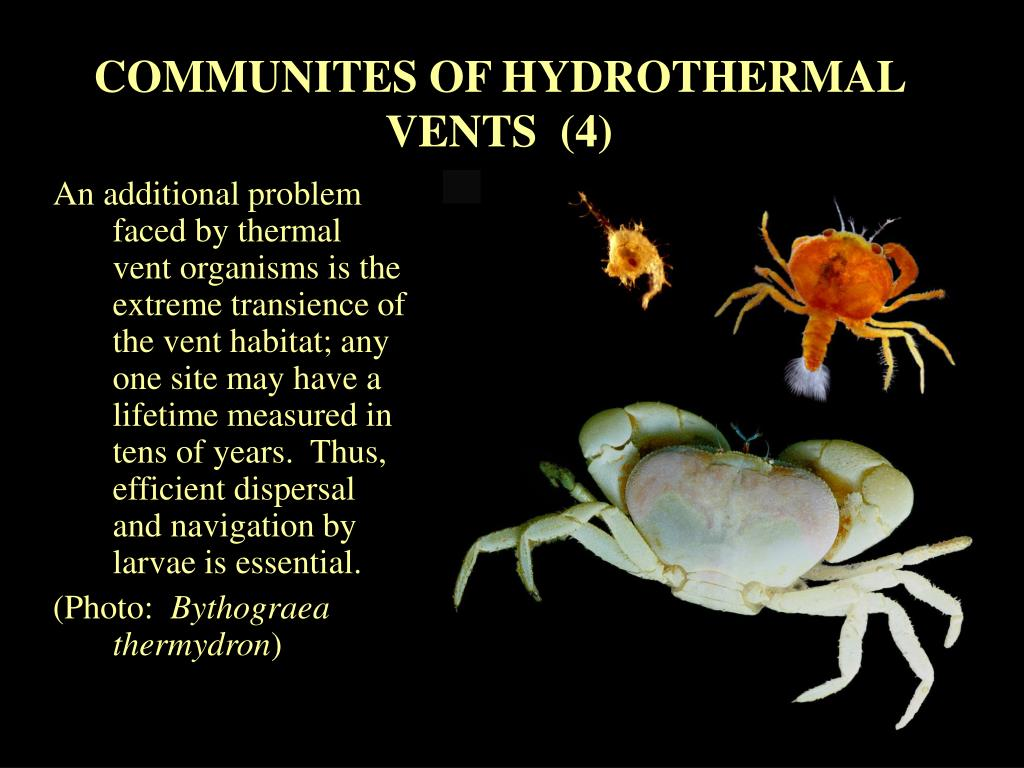 COMMUNITES OF HYDROTHERMAL VENTS  (4)