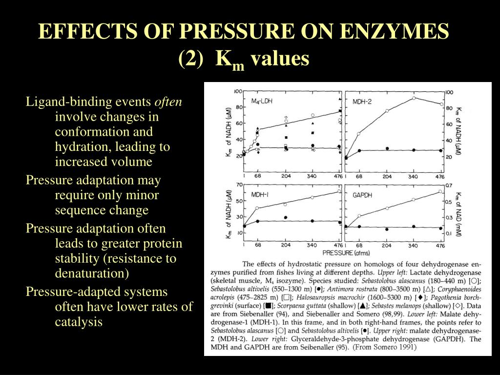 EFFECTS OF PRESSURE ON ENZYMES