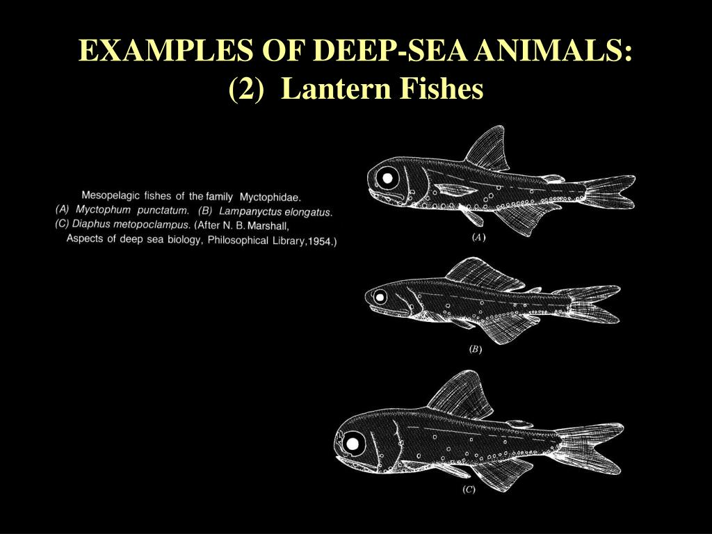 EXAMPLES OF DEEP-SEA ANIMALS: