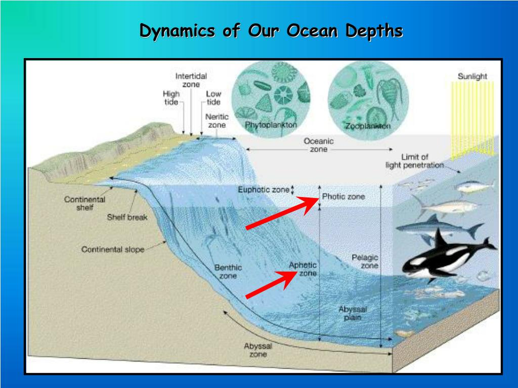 Dynamics of Our Ocean Depths