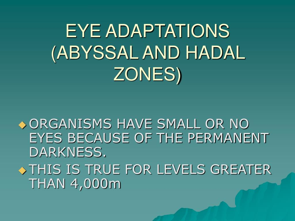 EYE ADAPTATIONS
