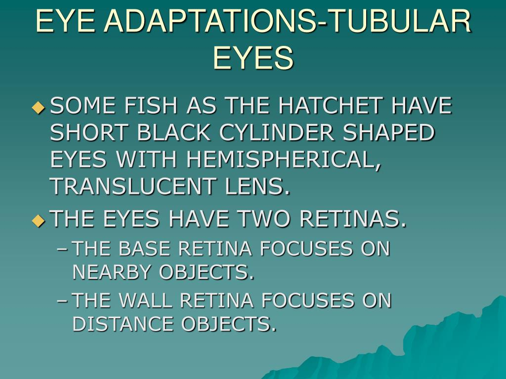 EYE ADAPTATIONS-TUBULAR EYES