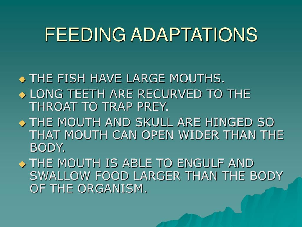 FEEDING ADAPTATIONS