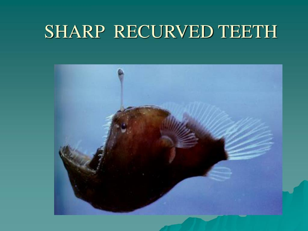 SHARP  RECURVED TEETH
