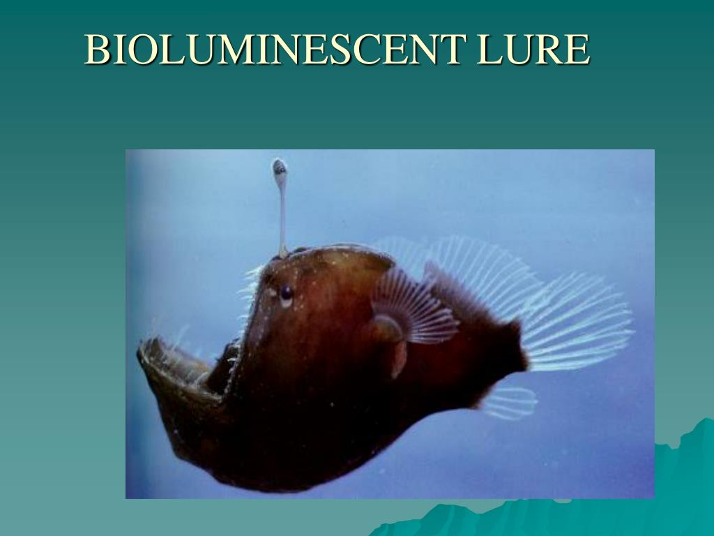 BIOLUMINESCENT LURE