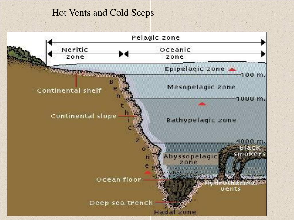 Hot Vents and Cold Seeps