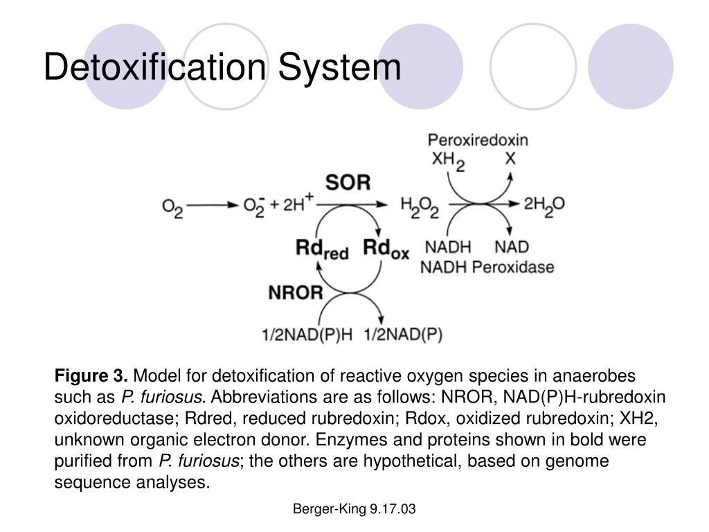 Detoxification System
