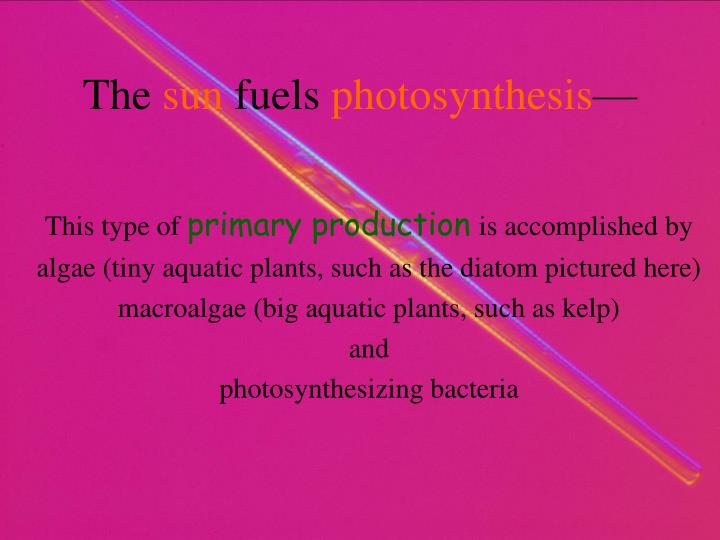 The sun fuels photosynthesis