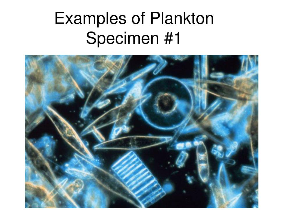 Examples of Plankton