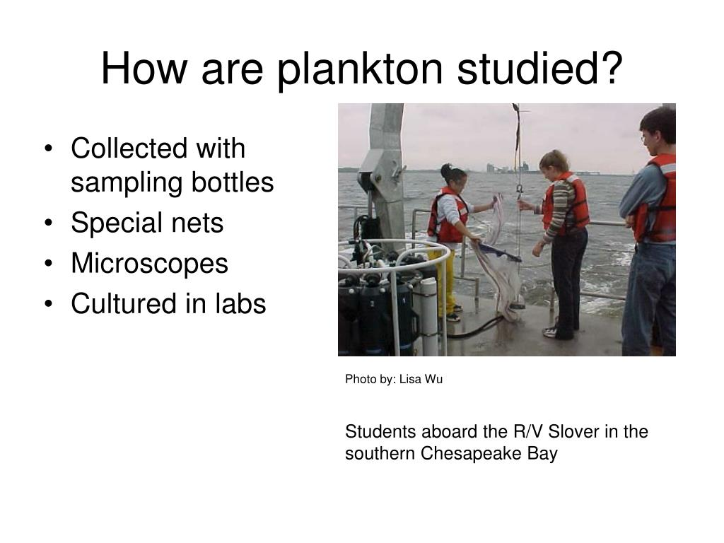 How are plankton studied?