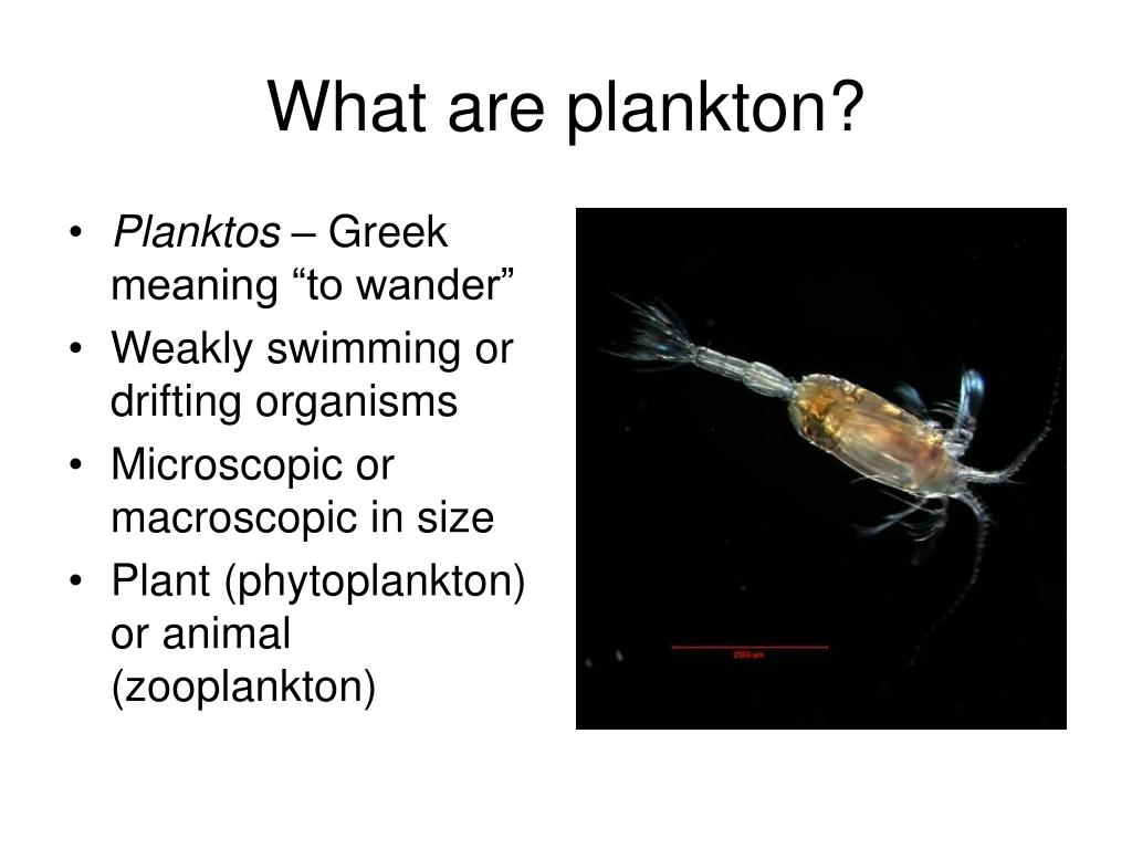 What are plankton?