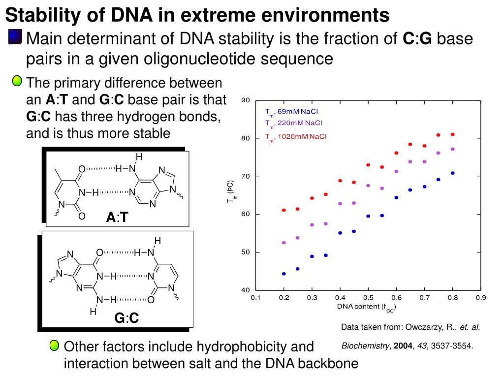Stability of DNA in extreme environments