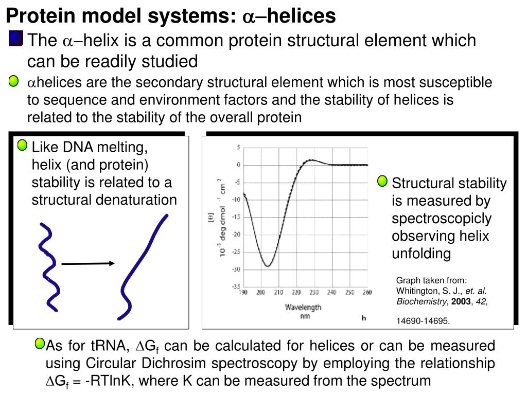 Protein model systems: