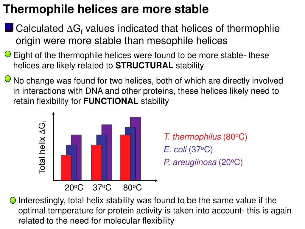 Thermophile helices are more stable