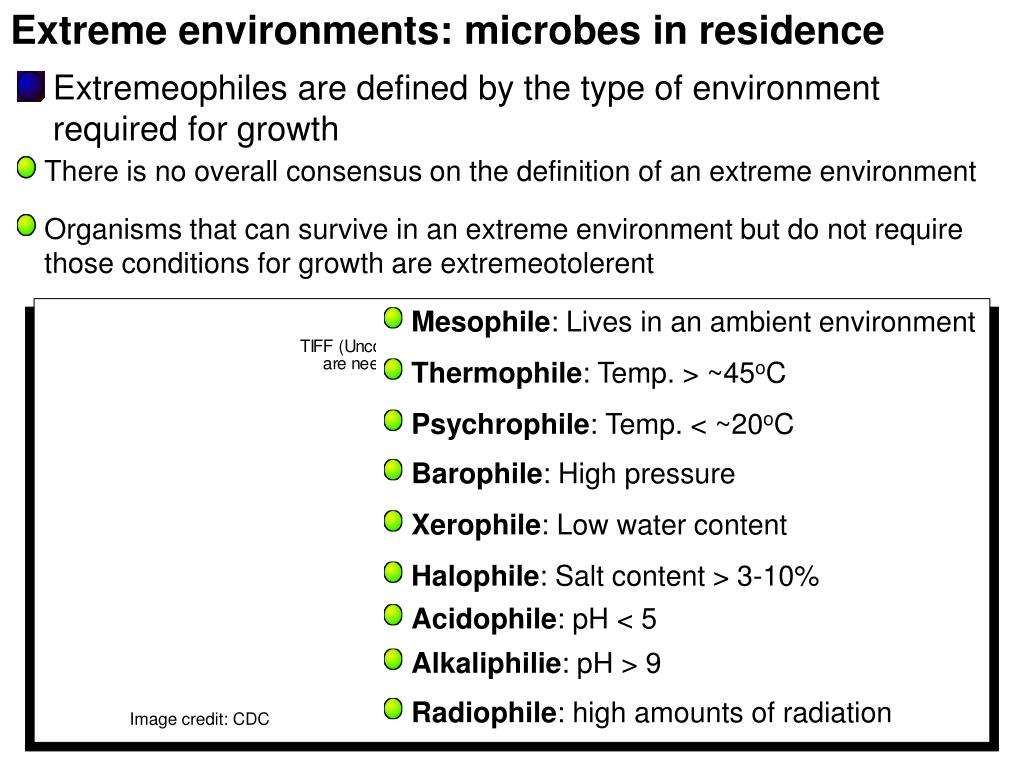 Extreme environments: microbes in residence