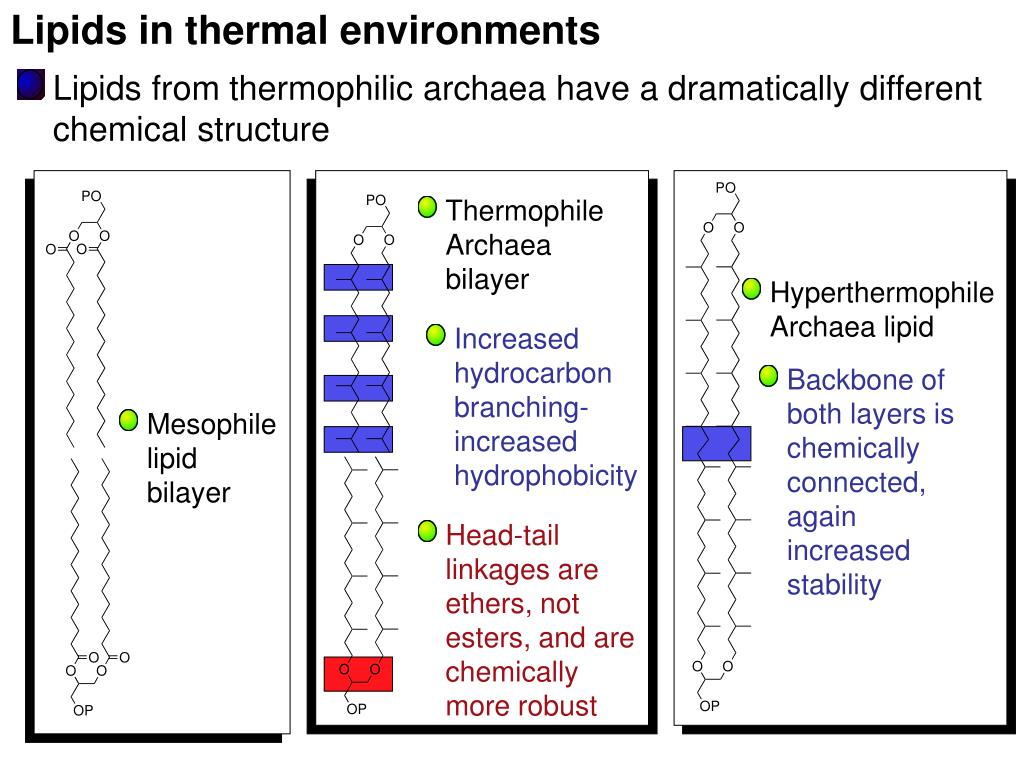 Lipids in thermal environments