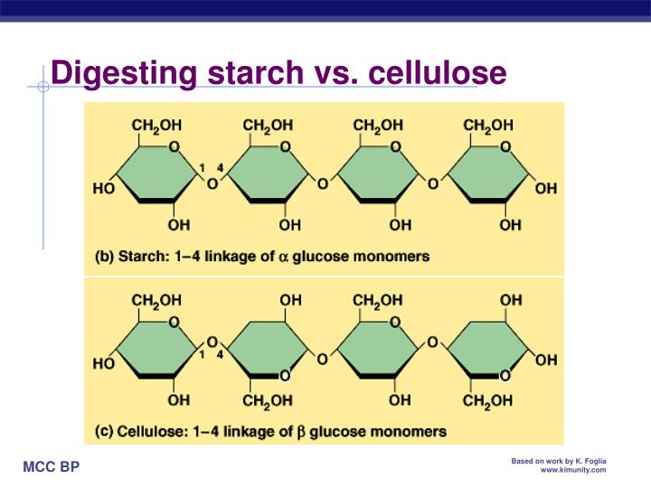 Digesting starch vs. cellulose
