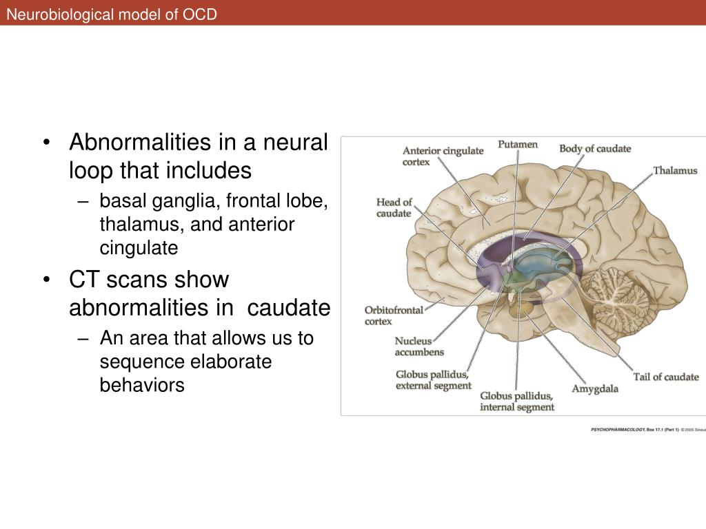 Neurobiological model of OCD