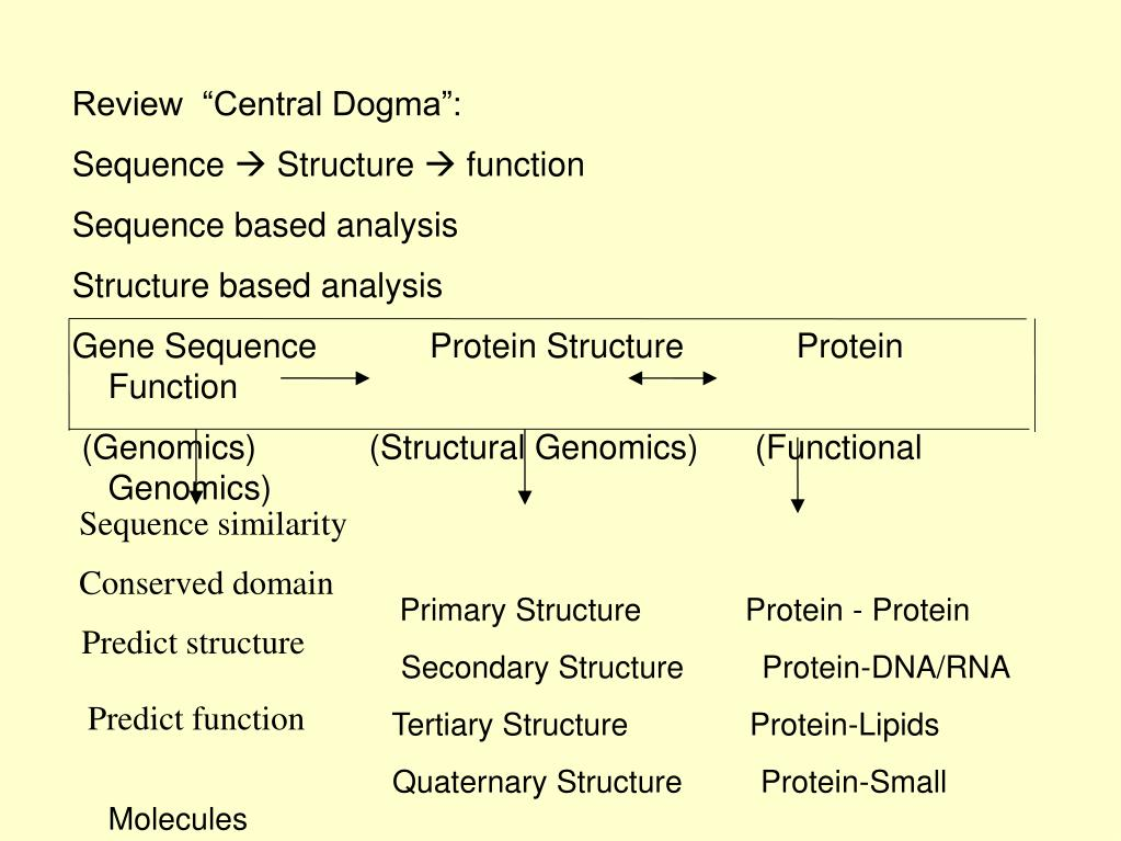 "Review  ""Central Dogma"":"