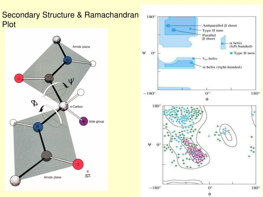 Secondary Structure & Ramachandran Plot