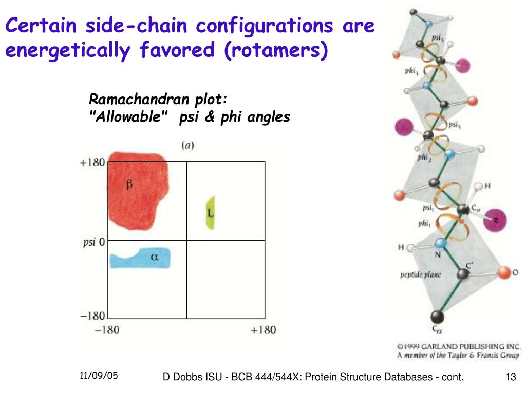 Certain side-chain configurations are energetically favored (rotamers)