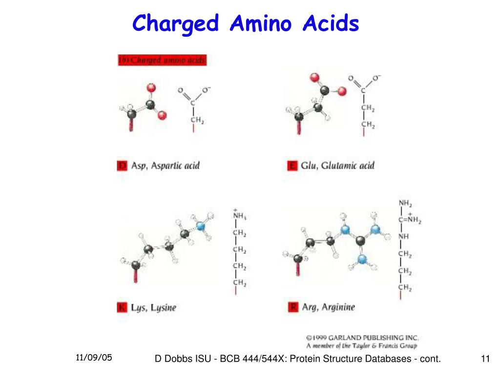 Charged Amino Acids
