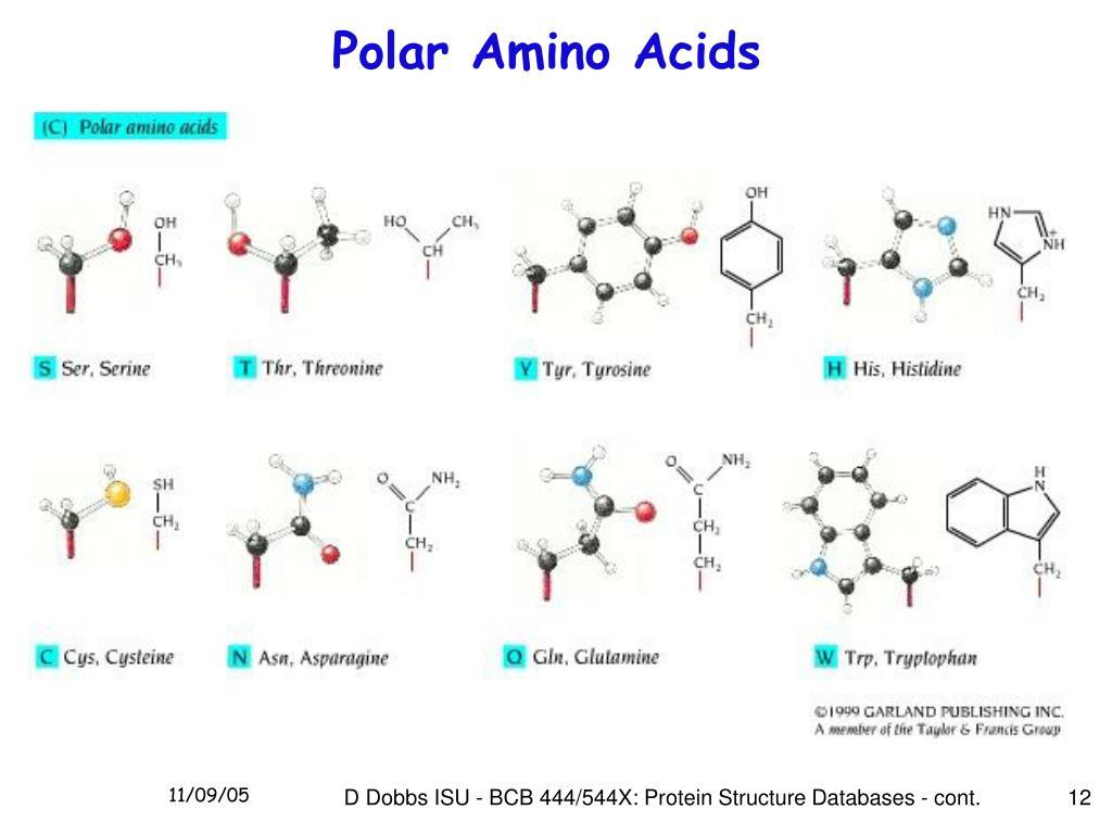 Polar Amino Acids