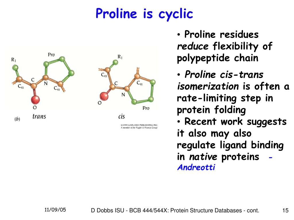 Proline is cyclic