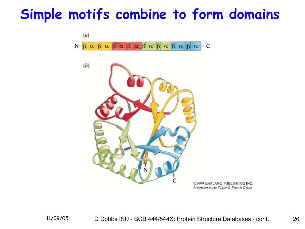 Simple motifs combine to form domains