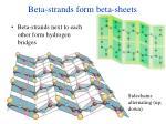 beta strands form beta sheets