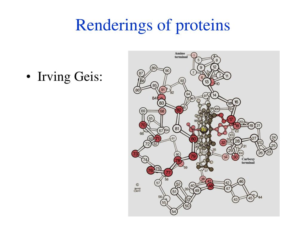 Renderings of proteins