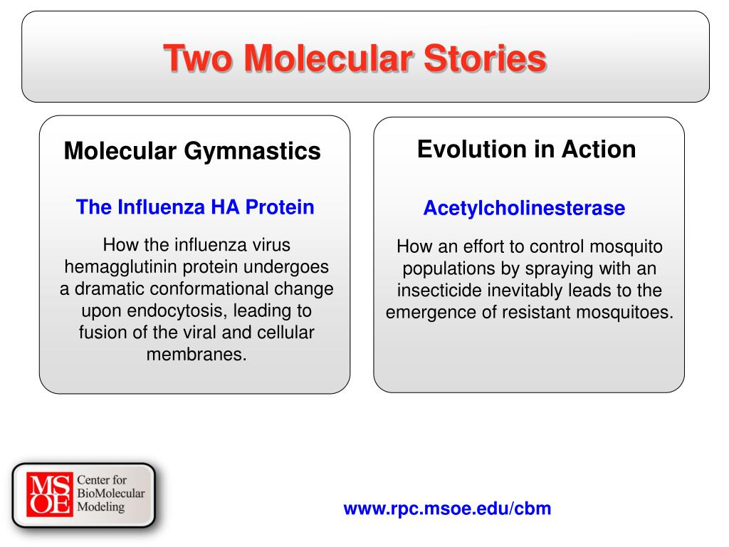 Two Molecular Stories