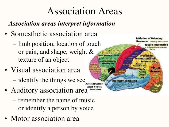 Association Areas